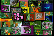 Coller Posters - Butterfly Collage Rectangle Poster by Thomas Woolworth