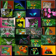 Coller Posters - Butterfly Collage Square Poster by Thomas Woolworth