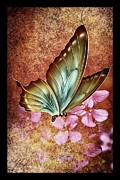 Wet Fly Mixed Media Prints - Butterfly Colors 2 Print by Todd and candice Dailey