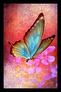 Wet Fly Mixed Media Prints - Butterfly Colors 3 Print by Todd and candice Dailey