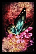 Wet Fly Mixed Media Prints - Butterfly Colors Print by Todd and candice Dailey