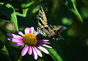 Debra Vronch Metal Prints - Butterfly Metal Print by Debra Vronch