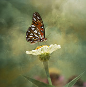 Gulf Fritillary Photos - Butterfly Dreams by Kim Hojnacki
