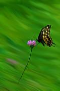 Dan Friend - Butterfly flying over flower