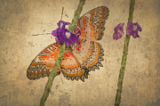 Tracy Munson Metal Prints - Butterfly Fresco Metal Print by Tracy Munson