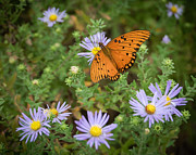 Butterfly On Flower Prints - Butterfly Garden Print by James Barber