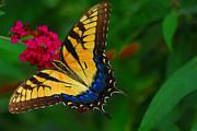 Geraldine DeBoer - Butterfly