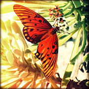 Florida Flowers Framed Prints - Butterfly II Framed Print by Chris Andruskiewicz