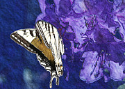 Tiger Swallowtail Digital Art Posters - Butterfly in Blue Purple and Brown Poster by Belinda Greb
