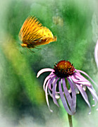 Marty Koch Photo Acrylic Prints - Butterfly In Flight Acrylic Print by Marty Koch