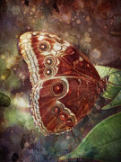 Barbara Orenya Prints - Butterfly in my garden Print by Barbara Orenya