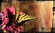 Blooms  Butterflies Framed Prints - Butterfly in Painted Frame Framed Print by James Lindstrom