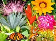 Van Ness - Butterfly in the Flowers