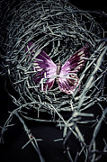 Barbwire Photos - Butterfly by Joana Kruse
