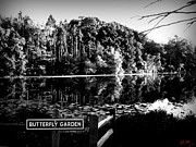 Willow Lake Posters - Butterfly Lake Poster by Jennifer L Washington