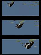 Butterfly Landing Print by Debra     Vatalaro