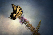 Jeff Burton Metal Prints - Butterfly Landing Metal Print by Jeff Burton
