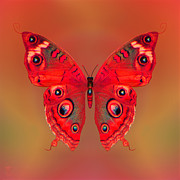 Photo Manipulation Originals - Butterfly by Li   van Saathoff