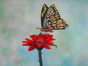 Rhonda Lee - Butterfly Love