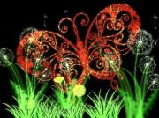 Daryl Macintyre - Butterfly Meadow