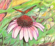 Lew Davis Drawings Framed Prints - Butterfly on a Cone Flower Framed Print by Lew Davis