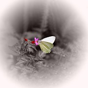 Butterfly On Flower Prints - Butterfly On A Pink Flower Print by Tracie Kaska