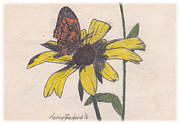 Daisy Drawings Originals - Butterfly on Daisy by Nancy Beckerdite