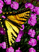 Photo-manipulation Photo Posters - Butterfly on Pink Poster by ABeautifulSky  Photography