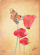 Flowers - Butterfly on Poppies by Iain S Byrne