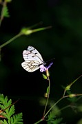Daliya Photography - Butterfly on the flower