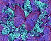 Butterfly Radial Violetmorpheus Print by Alixandra Mullins