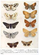 Science Photo Library - Butterfly specimens,...