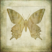Isolated Digital Art Prints - Butterfly Textures Print by John Edwards