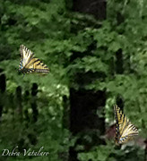 Dance In Water Prints - Butterfly Waltz Print by Debra     Vatalaro