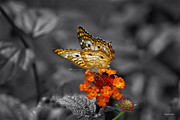 Butterfly Wings Of Sun Light Selective Coloring Black And White Digital Art Print by Thomas Woolworth