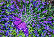 Butterfly.1 Print by Mariarosa Rockefeller