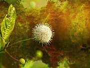 Layered Textures Prints - Buttonbush Print by J Larry Walker