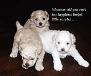 Maltese Puppy Prints - Buy Happiness Print by Lisa  DiFruscio