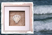Seashell Fine Art Posters - By the Sea I Poster by Sharon Elliott