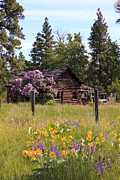 Old Barn Pen And Ink Photo Posters - Cabin and Wildflowers Poster by Athena Mckinzie