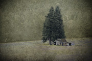 Pine Trees Metal Prints - Cabin Under the Trees Metal Print by Wendi Donaldson