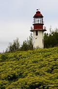 Barbara McMahon - Cabot Head Lighthouse