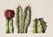 Desert Cactus Framed Prints - Cacti Framed Print by Annabel Barrett