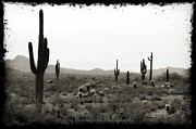 Tina Hannaford - Cacti Land