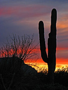 Marcia Socolik - Cactus at Sunset