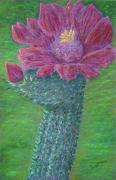 Cactus Pastels - Cactus Bloom by Dawn Marie Black