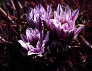 Xueling Zou - Cactus Blossom 3