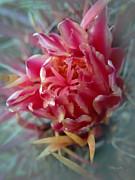 Cactus Blossom 6 Print by Xueling Zou