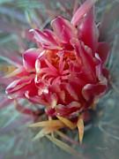 Xueling Zou - Cactus Blossom 6