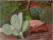 Paul Santander - Cactus in Sedona
